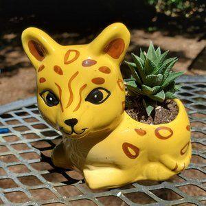 Yellow Cat Planter with Haworthia succulent